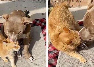 Bucuria unei pisici în momentul în care stăpânii ei adoptă un cățeluș orb!