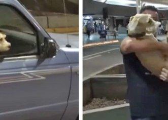 Despărțiți timp de zece zile, un cățel are parte de o revedere emoționantă cu stăpânul său!