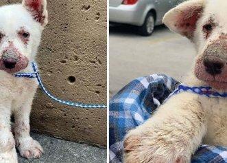 Un muncitor de pe stradă, ultima salvare a unui biet cățel bolnav!