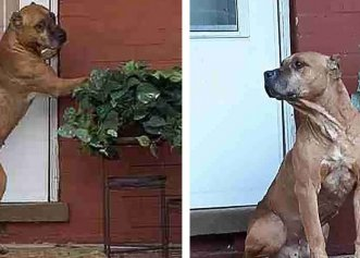Un cățel adorabil a fost surprins în același loc în care a fost abandonat de fosta lui familie!