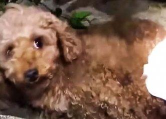 Abandonată într-un șanț cu picioarele rupte, o cățelușă și-a găsit liniștea într-o familie specială!