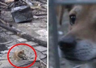 Un patruped a fost surprins în momentul în care își aștepta stăpânul în locul în care a fost casa lor!