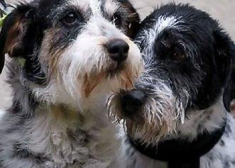 Doi căței adorabili au fost adoptați împreună! Frații nu vor mai fi nedespărțiți niciodată