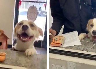 După ce a simțit că va fi adoptat, un cățel nu își poate reține fericirea!