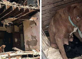O casă abandonată, refugiul găsit de o cățelușă pentru a aduce puii pe lume!