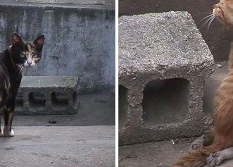 O pisică a fost nevoită să își ascundă puiul cu probleme de frică să nu fie rănit!