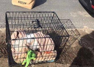 Abandonat într-o cușcă împreună cu jucăriile sale, un cățeluș primește o nouă șansă la viață!