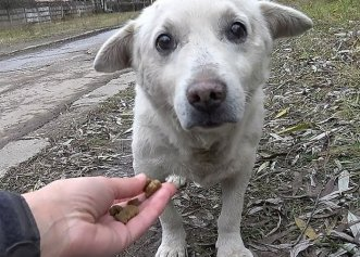 Refuzat de fostul său proprietar, un câine pierdut este adoptat de o nouă familie!