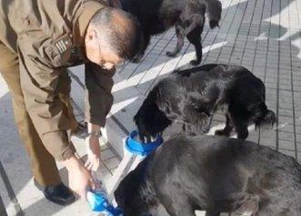 Timpul liber, ocazia perfectă pentru un polițist de a ajuta câinii fără stăpân!