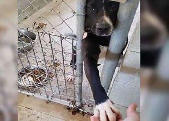 Dragostea unei familii, cea mai mare dorință a unui câine uitat în adăpost!