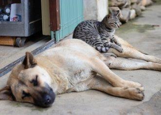 Infectarea cu coronavirus a cățeilor și pisicilor