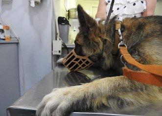 Rocco, soarta emoționantă a unui patruped abandonat de familia sa! Motivul greu de înțeles