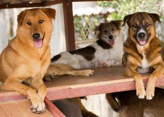Un taximetrist cu suflet mare! O bătrână a adoptat opt câini, iar șoferul a decis să îi ducă pe toți la noua lor casă