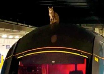 Întâmplare neobișnuită în Londra! A fost nevoie de trei ore pentru a convinge o pisică să coboare de pe un tren