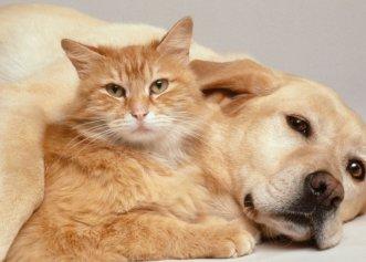 Veste bună pentru animalele de companie! Pandemia a crescut cererea de adopție