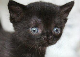 După ce a fost găsită într-o curte abandonată, pisicuța a cucerit pe toată lumea prin frumusețea ei!