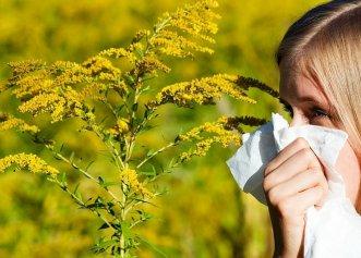Lucruri pe care nu le știai despre alergia la ambrozie. Aceste alimente sunt interzise în timpul alergiei! Manifestări mai puțin cunoscute