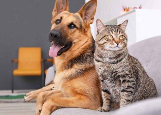 Timișoara, orașul în care îți trebuie aprobare de la vecini pentru a deține animale de companie