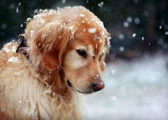 Îngrijirea patrupedului tău în timpul sezonului de iarnă! Sfaturi importante pentru iubitorii de animale