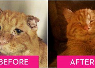 Cum s-a schimbat viața unui pisoi după ce a fost adoptat! Zâmbetul i-a revenit, iar acum are un nou motiv să trăiască