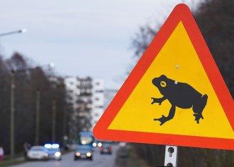 Un întreg drum aglomerat din Europa a fost închis din cauza broaștelor! Motivul pentru care s-a luat decizia