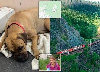 """Povestea impresionantă a unei cățelușe care a mers 200 de km pentru a ajunge """"acasă""""!"""