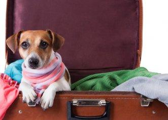 Ce pași trebuie să urmezi dacă vrei să călătorești în afara țării alături de câine sau pisică?