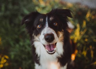 Imagini cu o prietenie deosebită! Un câine și o bufniță sunt de nedespărțit