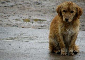 Metodă inedită pentru ajutorarea câinilor fără adăpost! Frigul nu va mai reprezenta o problemă