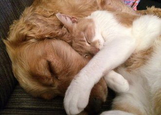 Pisicile sunt la fel de inteligente precum câinii? Uite ce spun SPECIALIȘTII
