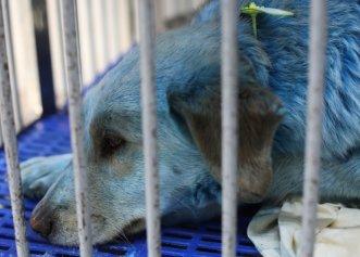 Un nou motiv de îngrijorare! În Rusia au apărut și câini verzi, rezultat al poluării excesive