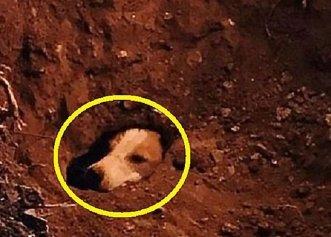 Un câine este salvat după ce a stat 12 ore blocat într-o vizuină de iepuri!