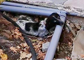 Orb și bolnav, un cățel de trei luni este salvat de pe străzile periculoase! Soarta micuțului patruped