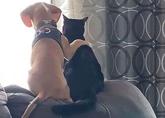 Imagini adorabile cu un cățel și prietena lui cea mai bună! O îmbrățișare cu totul emoționantă