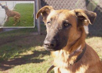 """Videoclip cu totul emoționant! Câinele fuge din adăpost, doar pentru a """"păzi"""" mormântul fostului proprietar"""