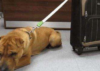 Motivul emoționant pentru care un cățel nu reușea să fie adoptat! Medicul veterinar a deslușit misterul