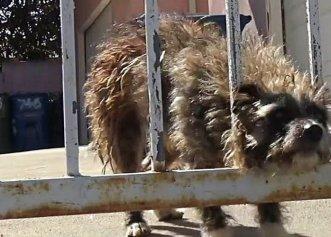 Decizia unei iubitoare de animale atunci când vede un adăpost de câini prea aglomerat!