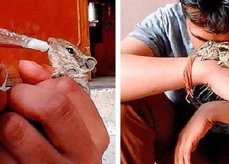 Vești bune pentru animale! Prima țară din lume care recunoaște animalele drept ființe cu drepturi