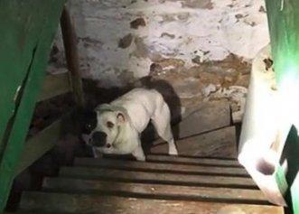 Reacția unui patruped abandonat într-o pivniță! El a fost găsit de noul proprietar