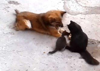 Scene adorabile după ce o pisică își prezintă puii unui cățel! Cei doi erau prieteni de multă vreme
