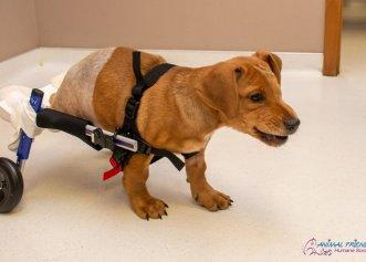 Bucuria unui cățel adoptat după ce a trecut printr-un grav accident! Un tren a fost cât pe ce să îi fie fatal