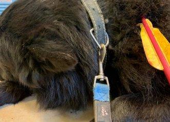 Câine străpuns de o săgeată într-un sat din Suceava! Poliția a deschis un dosar penal