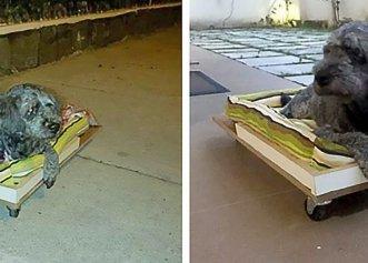 Loialitatea fără limite a unui câine! El refuză să plece de lângă mormântul micului său prieten