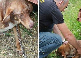 Trecut printr-o grea suferință, un câine primește o nouă șansă la viață!