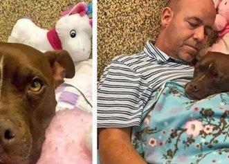 Ajutorul unui bărbat pentru un câine pe care nimeni nu voia să îl adopte! Povestea emoționantă
