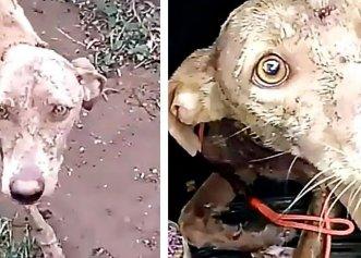 O îmbrățișare ce avea să salveze două vieți! Povestea unor câini programați la eutanasiere