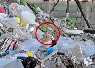 Despărțit de mama sa, un cățel cu lacrimi în ochi a fost găsit într-o zonă plină de gunoaie!