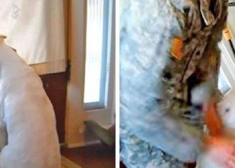 Transformarea unui cățel găsit abandonat într-un butoi! Patrupedul era extrem de slăbit și bolnav