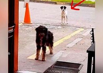 Considerat cel mai trist câine din adăpost, patrupedul are parte de o transformare uimitoare după ce este adoptat!