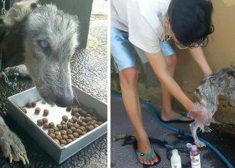 Salvarea la limită a unei cățelușe Husky! Patrupedul era la un pas să moară de foame